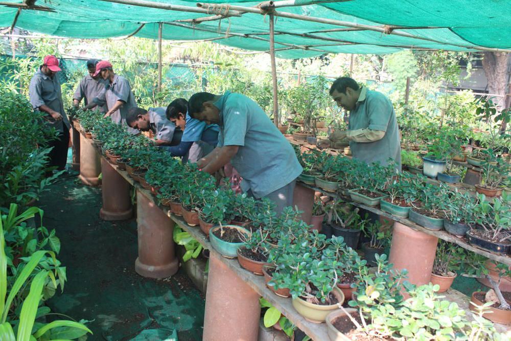 2019-11-11-gardening_nurseryunit-sandhyagaonkar.jpg