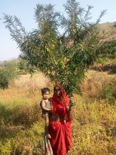 2020-08-05-RajasthanBalKalyanSamiti_Supportapoortribalfarmerwithseeds_2.jpeg